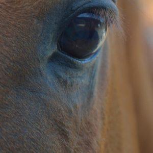 Pferde als Coach