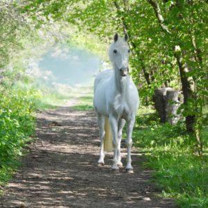 Pferde Luna